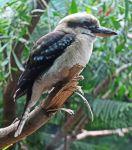 seattle zoo visit photography bird branch