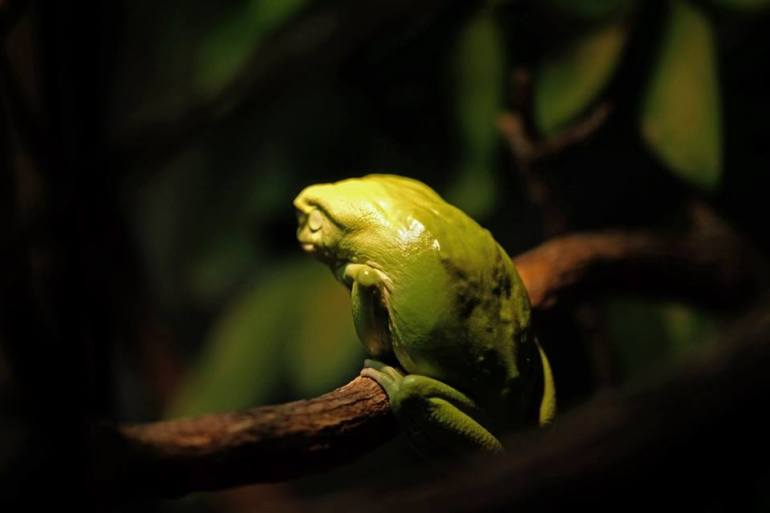 green frog spotlight branch seattle zoo visit travel photography
