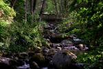 lithia park visit ashland oregon trees moss sunshine creek photography