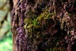 lewis river mossy tree lewis falls hiking