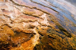 yellowstone32