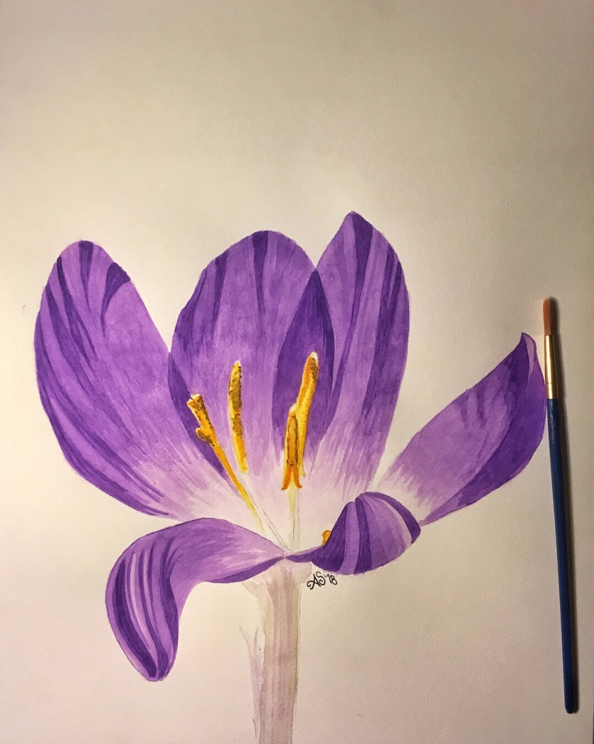"Crocus in watercolor - 11""x15"""