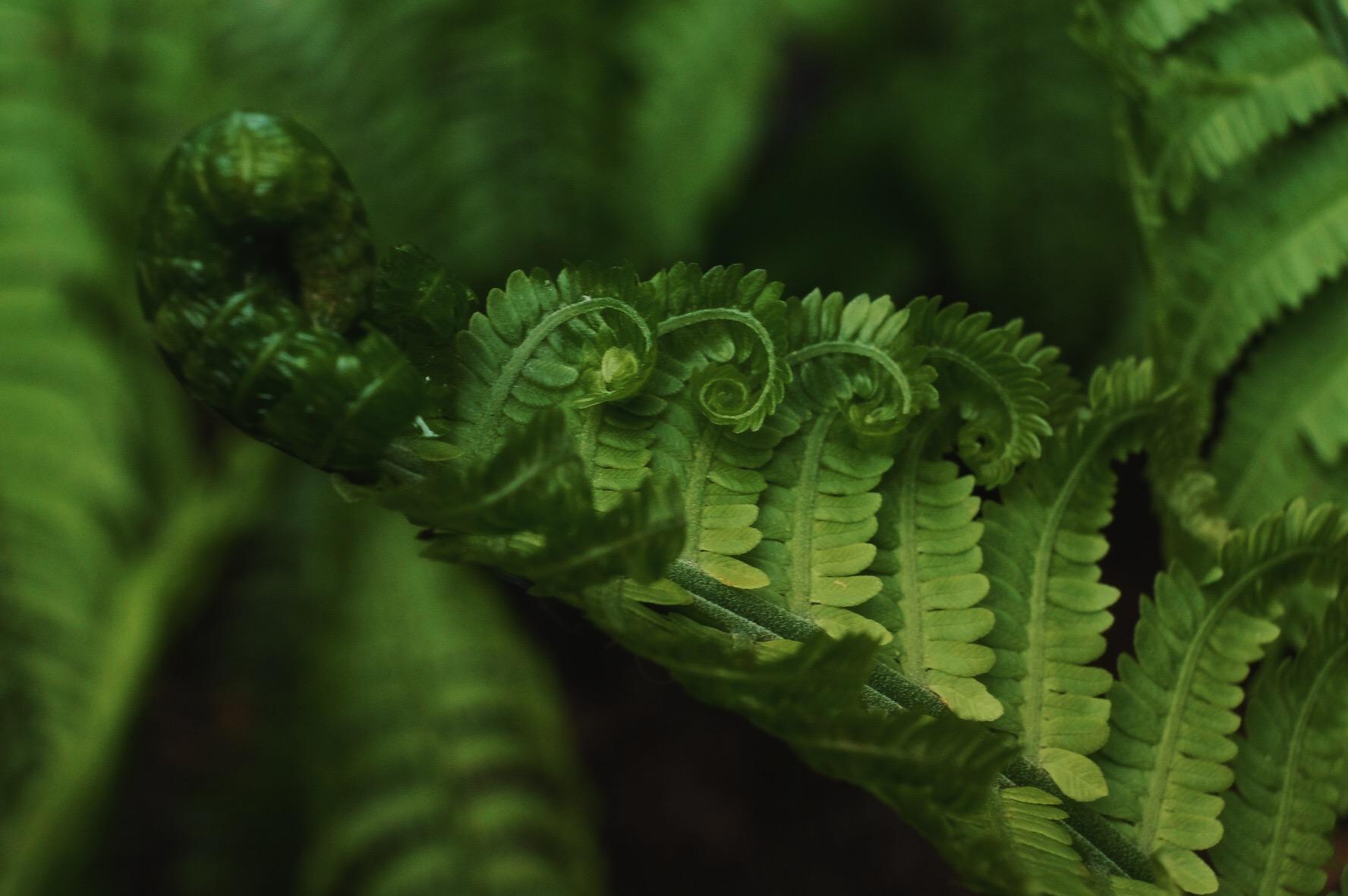 anna a  snook  u2013 writer  photographer  naturalist
